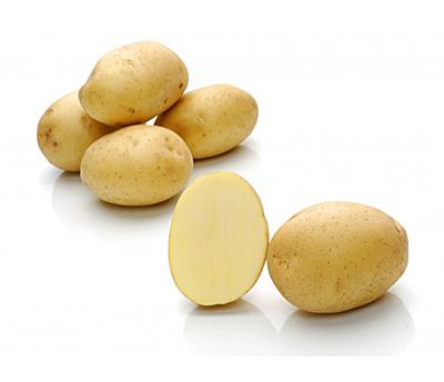 Сорт лада картофель