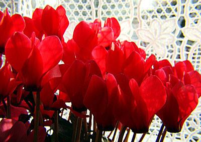 Цветы в солигаличе