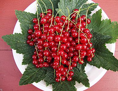 Елизавета названия лесных ягод